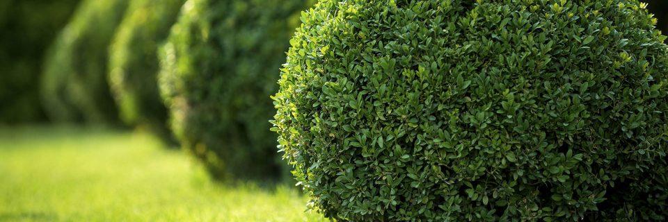 l'entretien des jardins, des parcs et des espaces verts